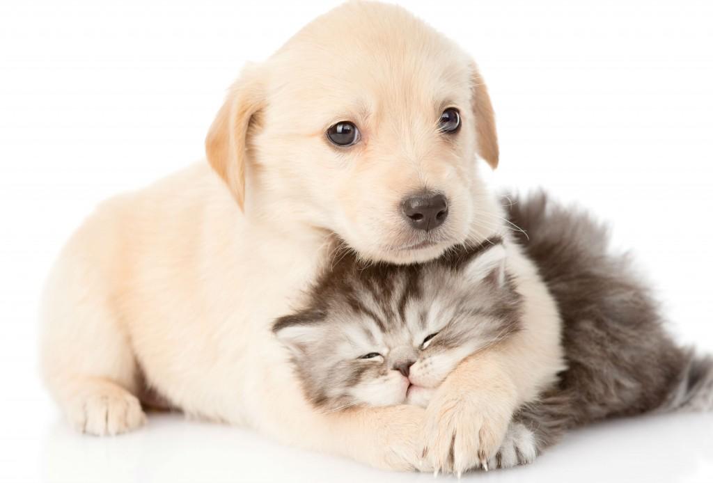 hjaelp-til-dyrlaegeregning