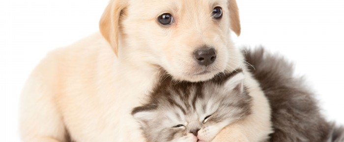 Hvad gør du, hvis din hund eller kat bliver akut syg